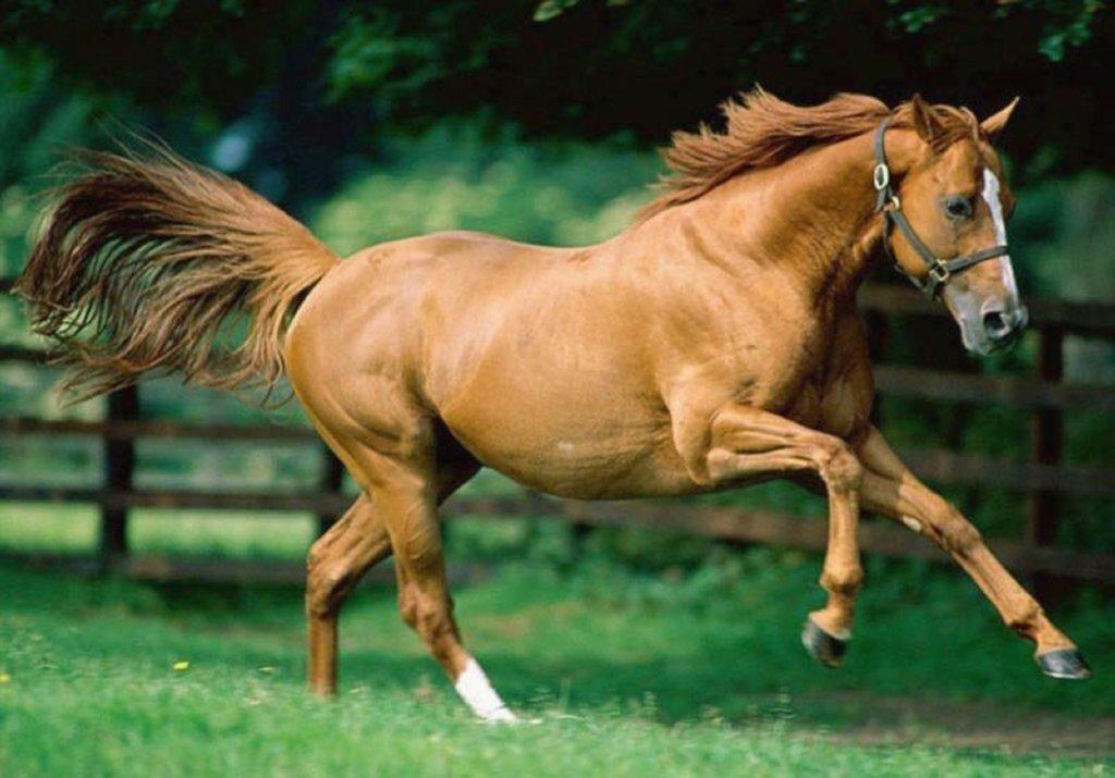 cavallo espressioni facciali