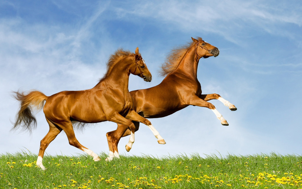 cavalli leggono emozioni